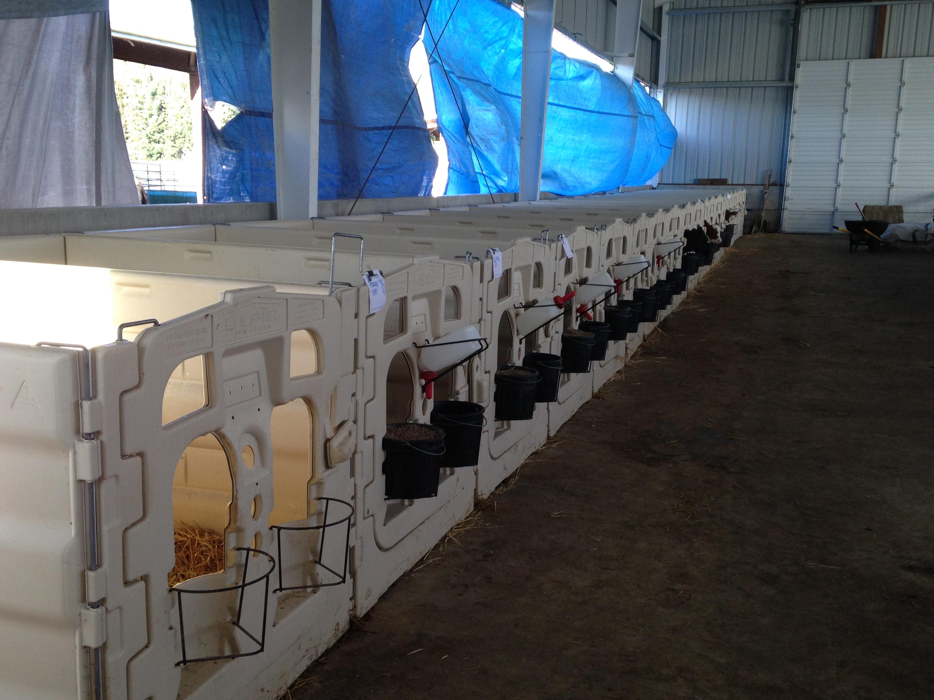 calf | Sun-Ton Farms